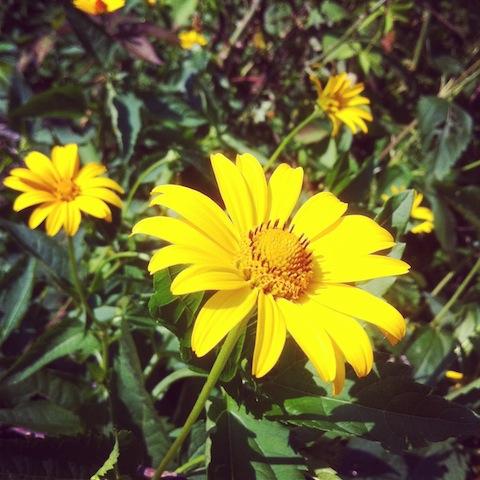 Pflanzen - Blumen