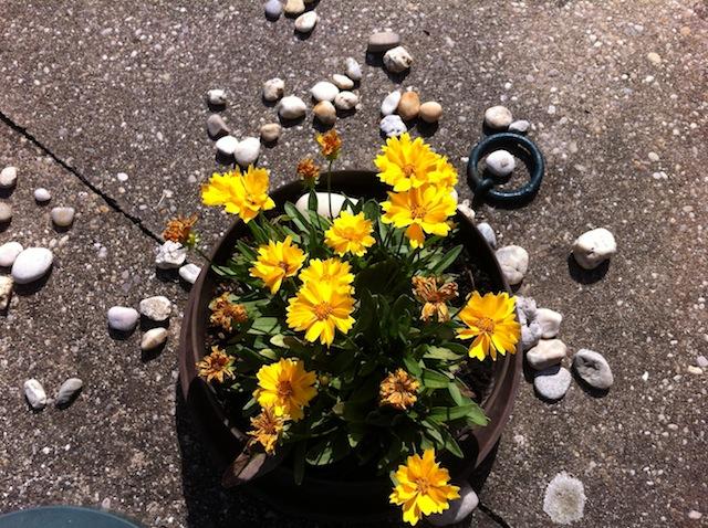 Blumentopf bewässern