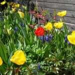 Gartenpflanzen nicht bei Sonne gießen