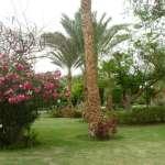 Garten richtig anlegen durch gute Planung