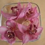 Orchideen in der Vase