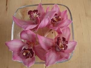 Haushaltstipps - Orchideen als Dekoration
