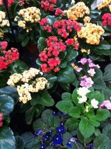 Blumen mit Hausmittel düngen