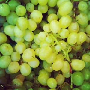 Weintrauben - herbstliche Dekoration