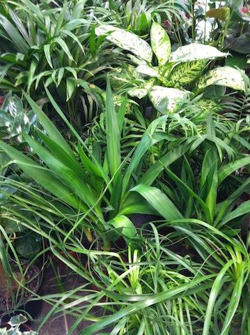 Zimmerpflanzen - Blätter abwischen