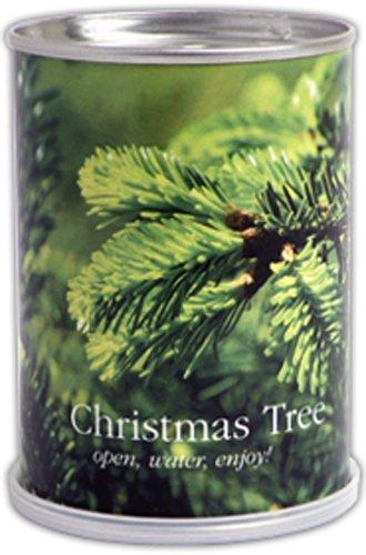 Weihnachtsbaum selber ziehen