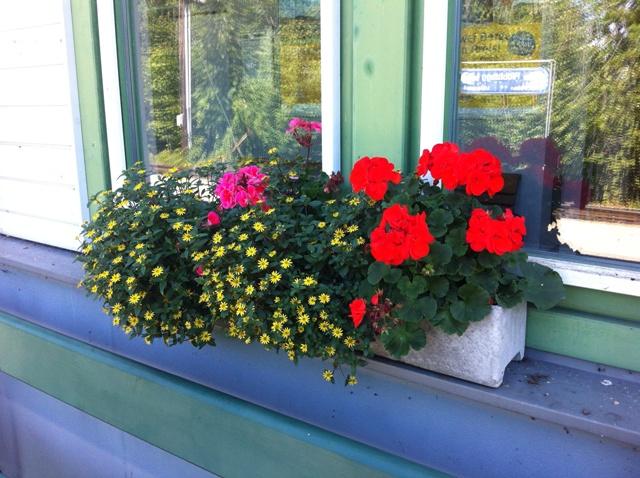 Fabulous Blütenstaub vom Fenster entfernen HY95