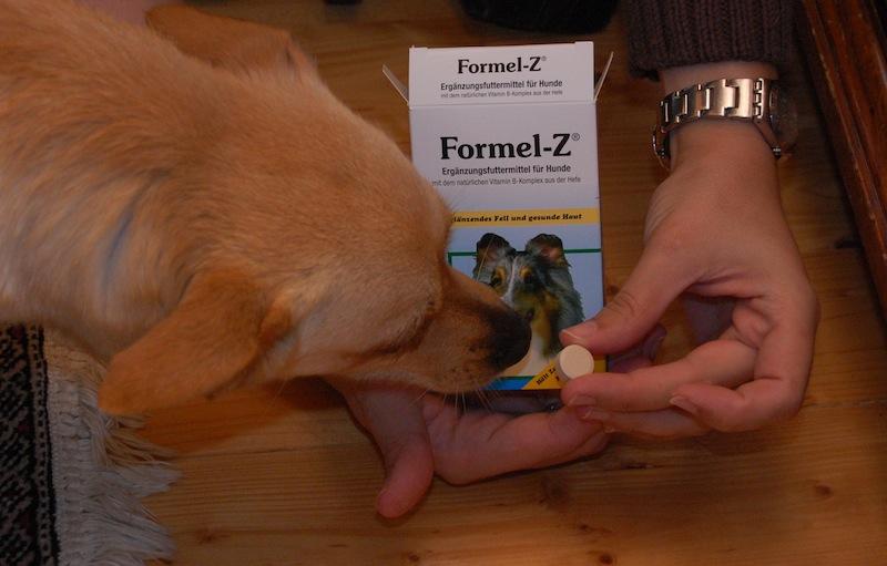 Formel-Z gegen Zecken bei Hunden