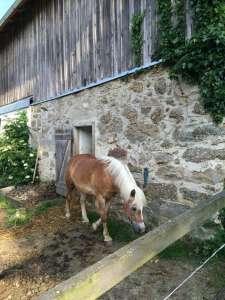 Biohof Besenbäck - Pferd im Stall