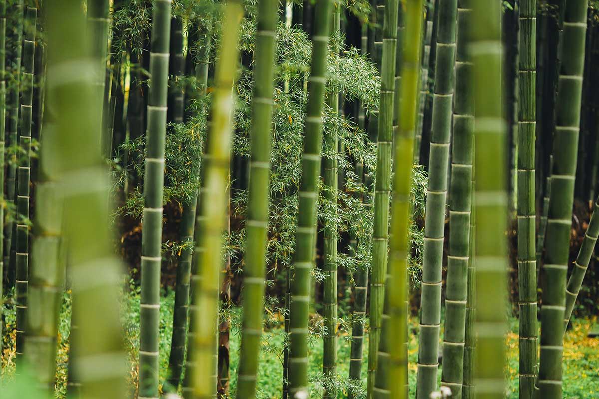 Unterwäsche aus Bambus