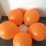 luftballonblume-aussen
