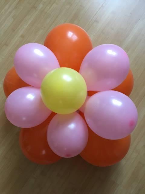 Luftballonblume