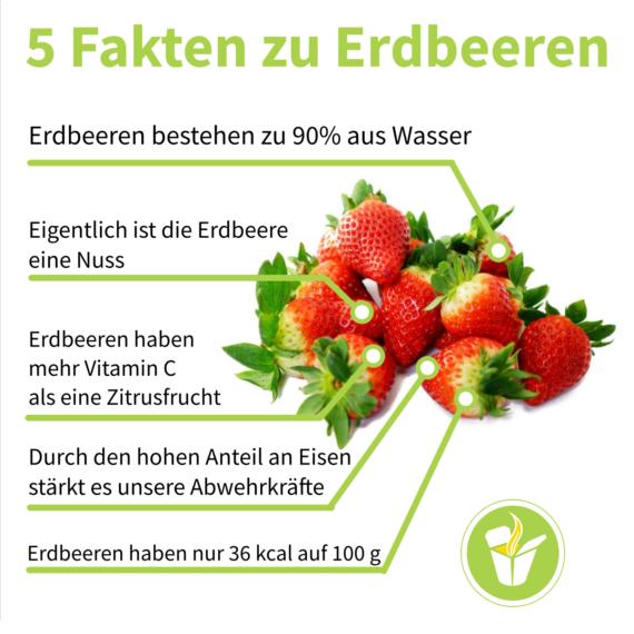 5 Fakten zu Erdbeeren