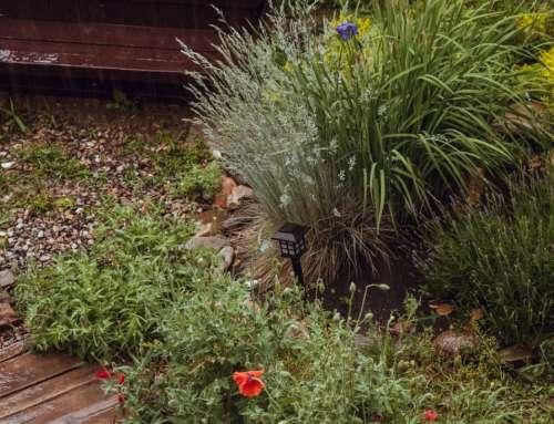 Ideen für den Garten – Tipps zur Gestaltung