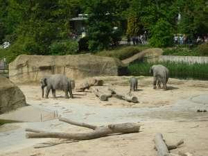 Kölner Zoo - Elefantengehege